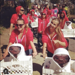 Comic-Con Event Staffing